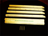 WV Tree Stakes - Image