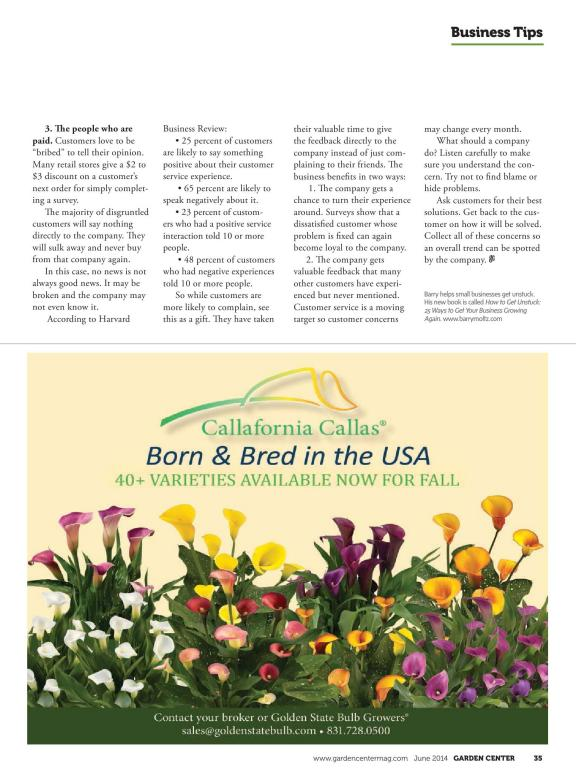 3 cuttings 6-8 inches Fuchsia Son of Thumb plant