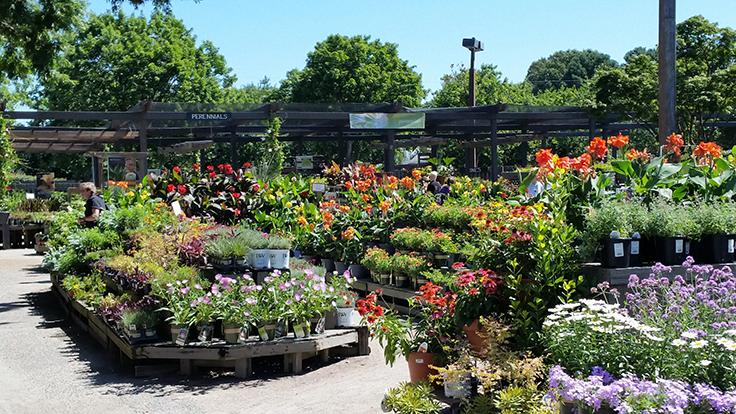 Exploring the garden centers of Hampton Roads - Garden Center Magazine