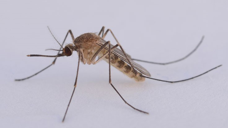 Tick, mosquito-borne infections surge in US