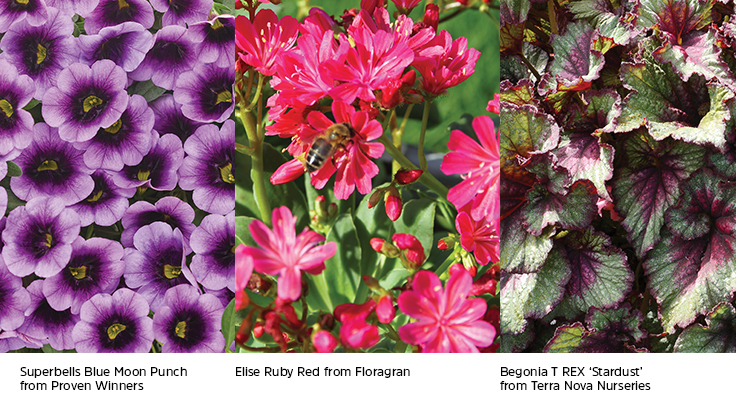 new annual flower varieties guide greenhouse management