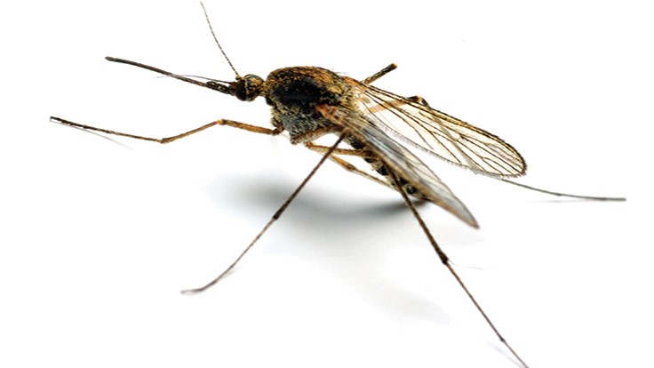 Human West Nile case reported in Greenwood County