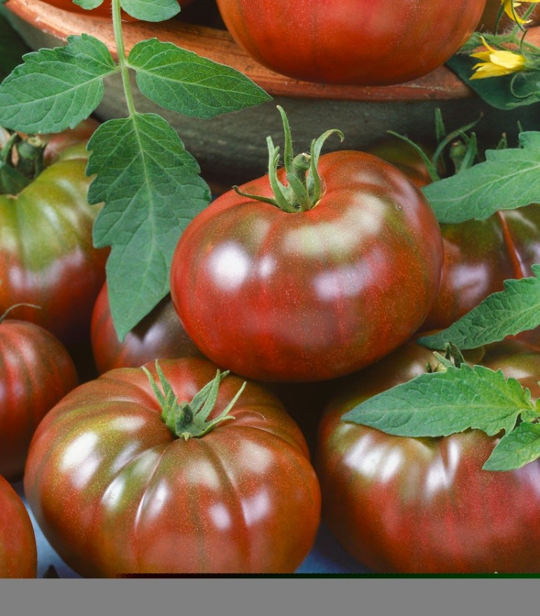 Tomato Chef's Choice Black F1