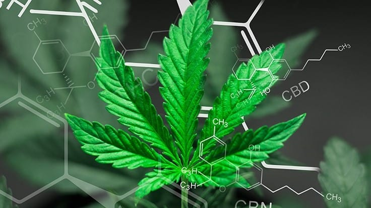 Cannabis Business Times' Top 10 Articles of 2019 4