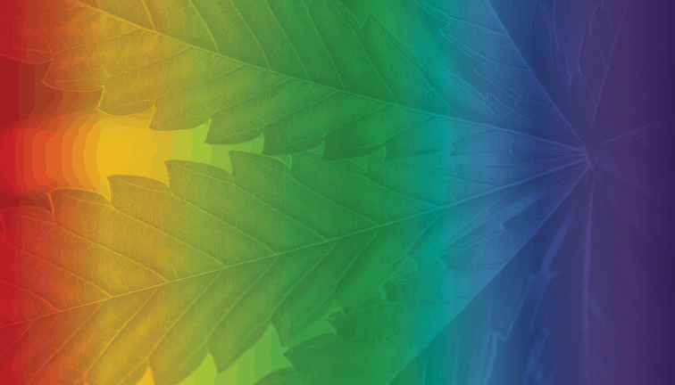Cannabis Business Times' Top 10 Articles of 2019 9
