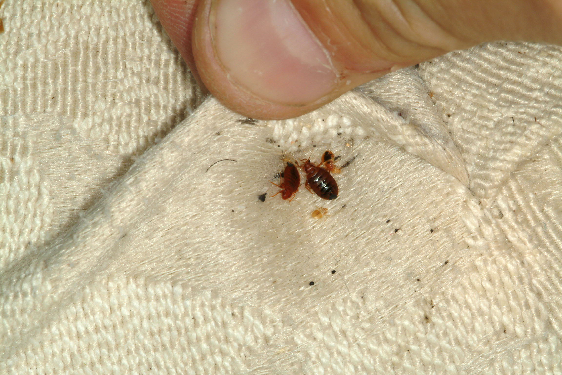 three n j state building being monitored for bed bugs