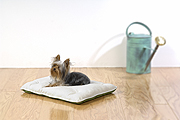 Biodegradable pet bed - Image
