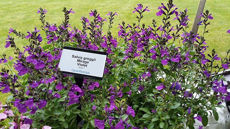 Atlantic Avenue Orchid Garden Creates Certified Pollinator Garden Garden Center Magazine