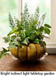 Bring it indoors Garden Center Magazine