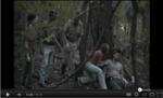 Video: The Borneo Blood-sucking Spider - Image