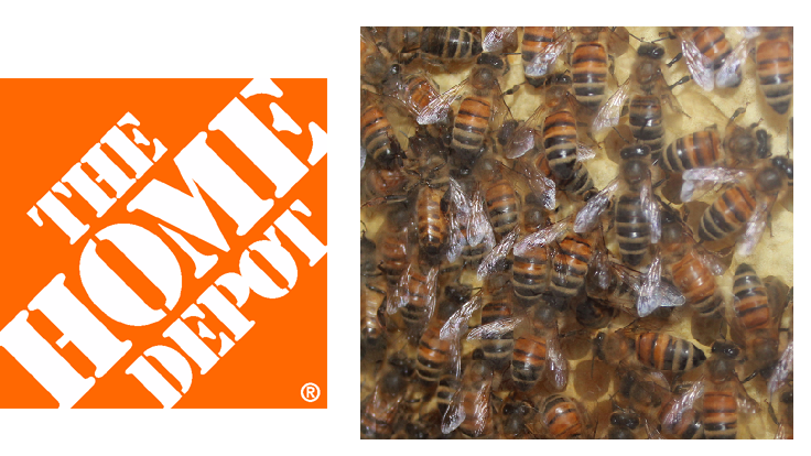 Home Depot to phase out neonics by 2018 - Greenhouse Management