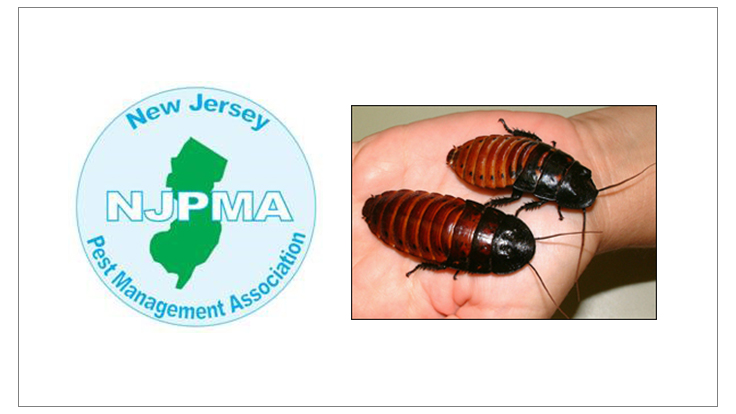 'Romney' Cockroach Beats 'Obama' Cockroach in NJ Derby - Image
