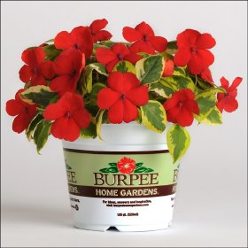 Burpee Home Gardens Will Launch Flower Line For 20