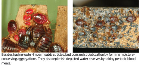 Bed Bug Supplement Diatomaceous Earth Where Do Bed Bugs Stand When The Dust Settles Pct Pest Control Technology