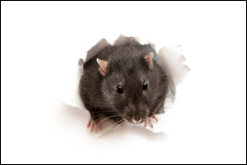 EPA Revises Its 2008 Rodenticide Risk Mitigation Decision for Professional Use Products - Image