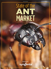 State of Ant Market Cover