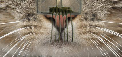 E-whiskers are highly responsive tactile sensor networks made from carbon nanotubes and silver nanoparticles that resemble the whiskers of cats and other mammals.