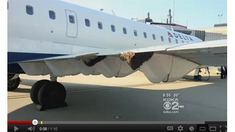Pittsburgh Airport Flight Delayed Due to Bees - Image