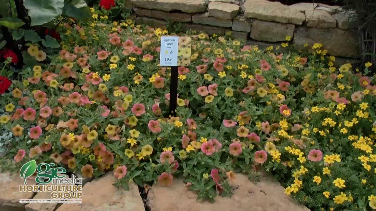 A bit of honey [video] - Garden Center Magazine