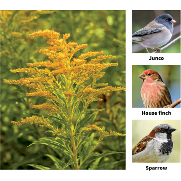 10 plants that bring birds to the garden - Garden Center