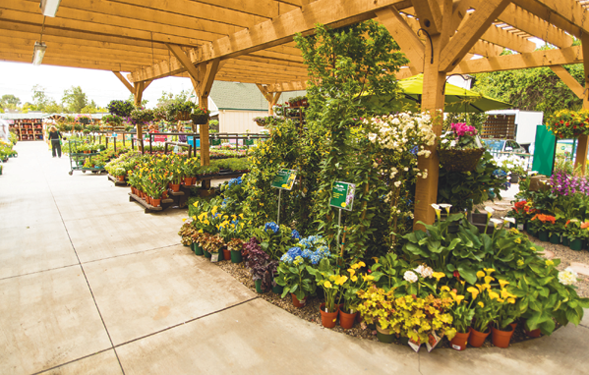 Armstrong And Pike Expanded Plant Production By 15 Percent To Have More  Control Over The Supply Of Annuals, Perennials, Vegetables, Herbs And  Houseplants.