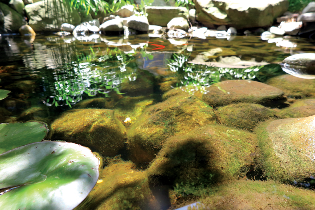 drought planting pond waterfall ideas support wildlife with water garden center magazine
