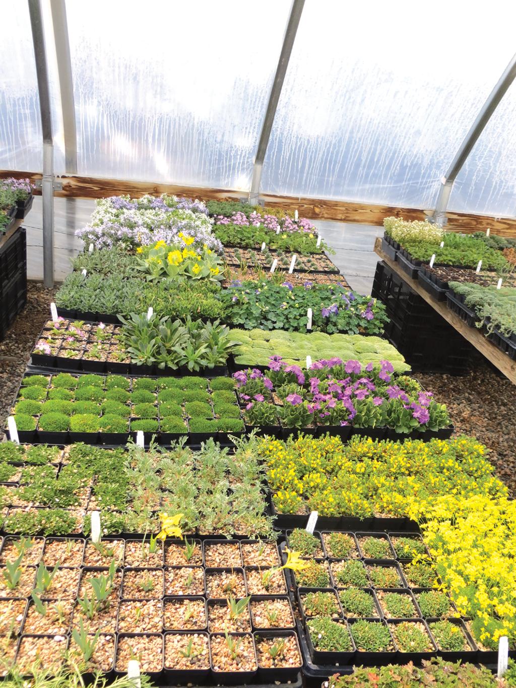 Garden Center Magazine April 2017 Perennial Plant