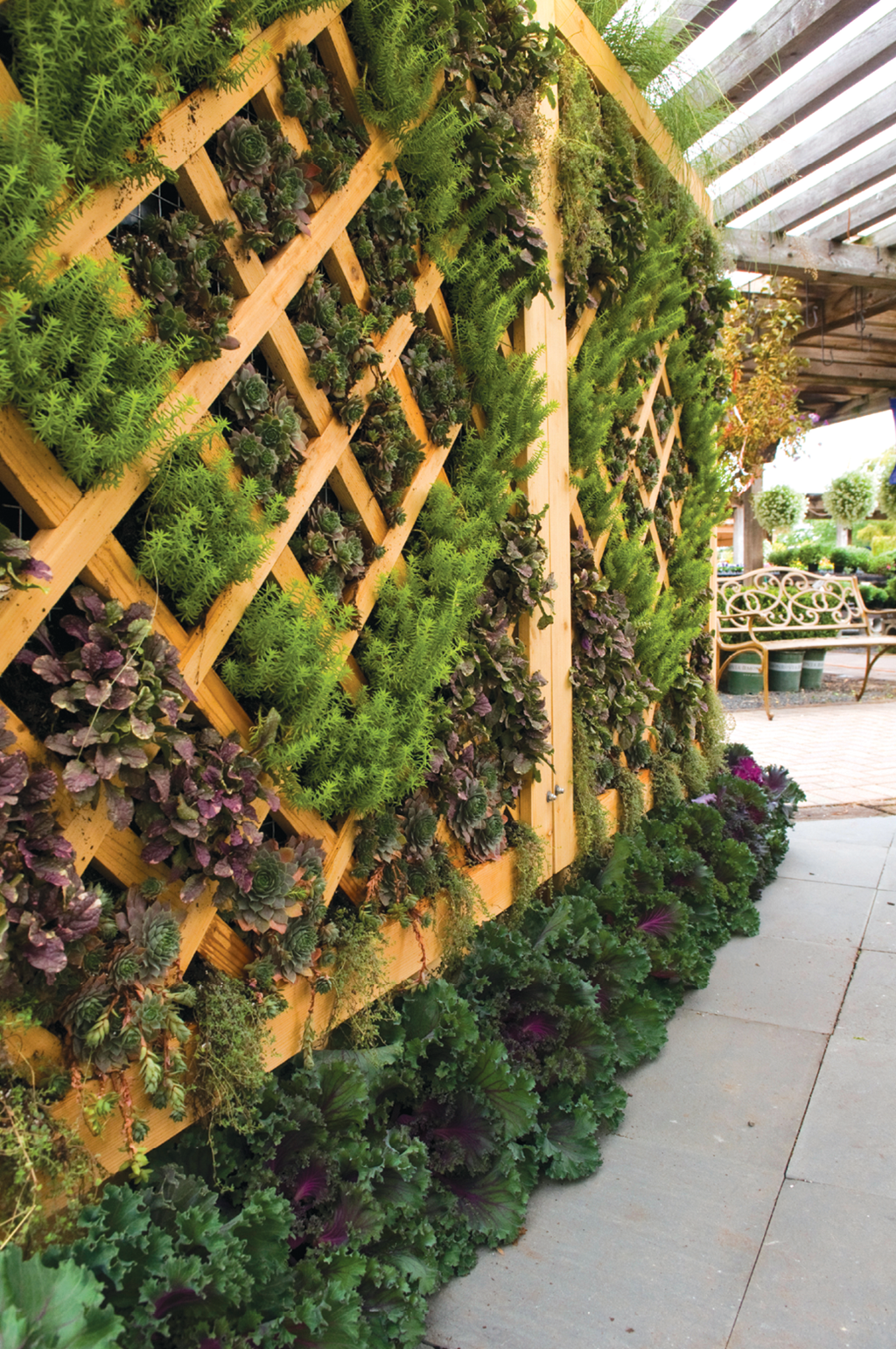 Ornamental garden walls - This Living Wall Built By Chalet Includes Ajuga Burgundy Glow Sedum Angelina Ornamental Kale And Sempervivum