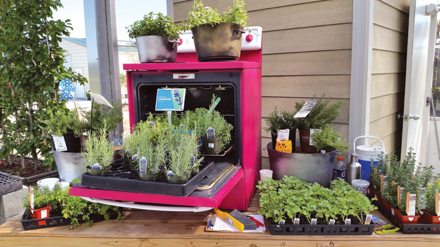 A Plant Display Built Into An Oven At Andersonu0027s.