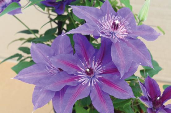 0b60d545a Helping flower shops blossom - Garden Center Magazine