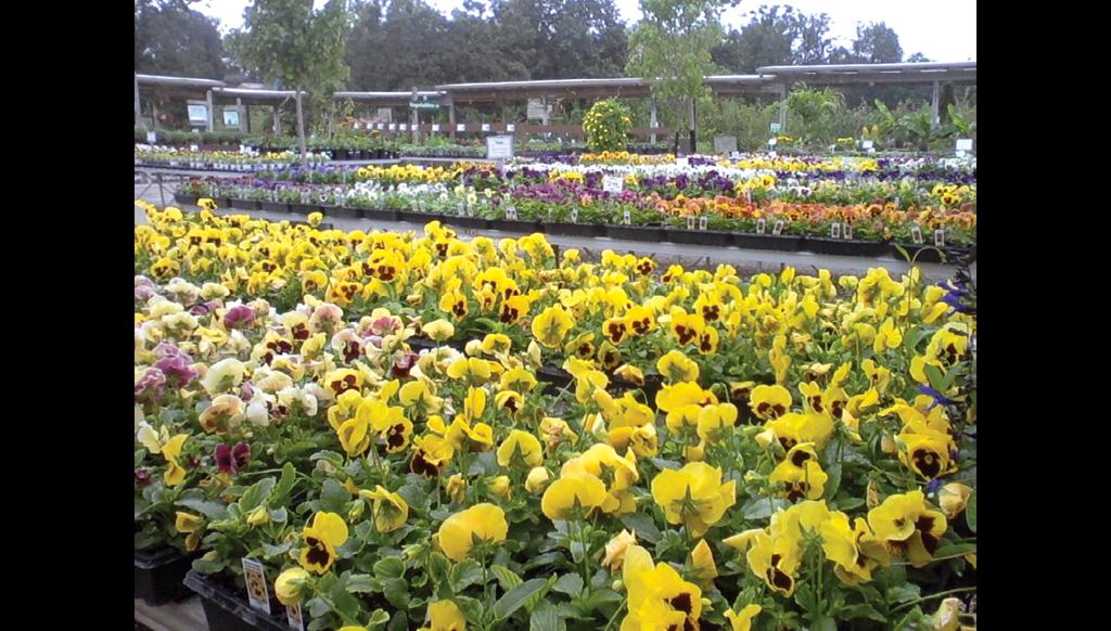 Boost your brand through YouTube - Garden Center Magazine