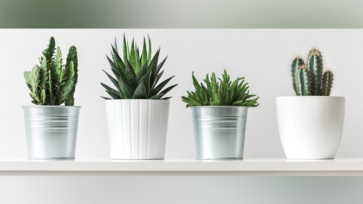 comes in a variety of colors Geometric Planter