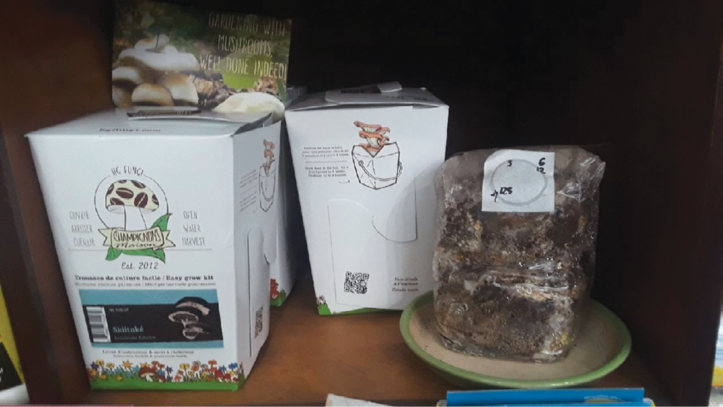 Elevating your edibles with indoor mushroom kits - Garden