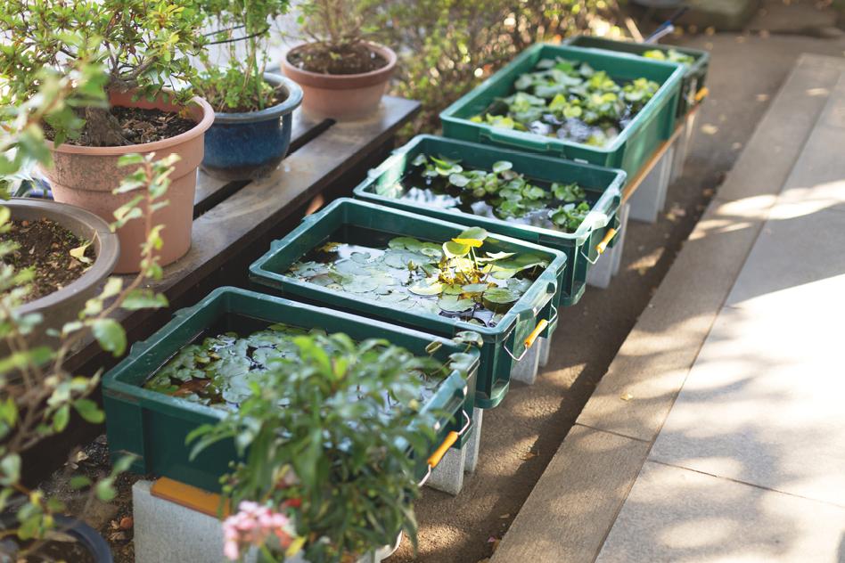 Bring The Water Garden Indoors Garden Center Magazine
