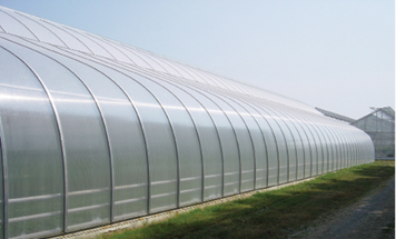 Consider Your Covering Greenhouse Management