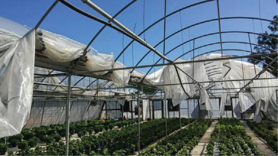 High winds and rain during Hurricane Matthew resulted in damaged plants, roofs and the loss of paperwork and office supplies at Ladybug Greenhouses in North Carolina.