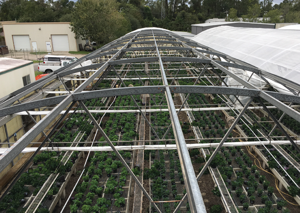 Hurricane Matthew left a trail of destroyed roofs, structural damages and plant losses at Oelschig Nursery valued at about $40,000.