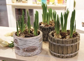 Wood and faux wood as popular pot materials