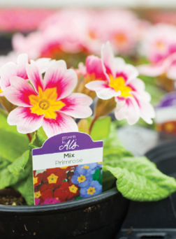 The Grown by Al's brand directly communicates the locally grown message to customers who are interested in supporting the local economy and understanding where their plants are grown.