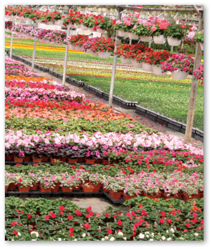 Greenhouse Management May 2017 Perennial Plant