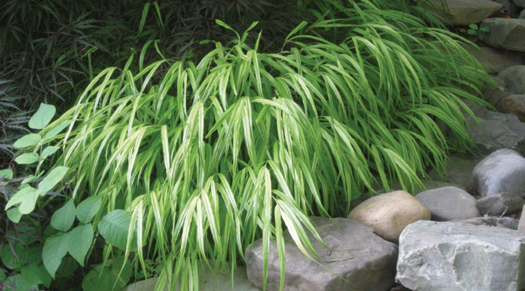 Ornamental Grasses And Sedges Are Susceptible To Diseases