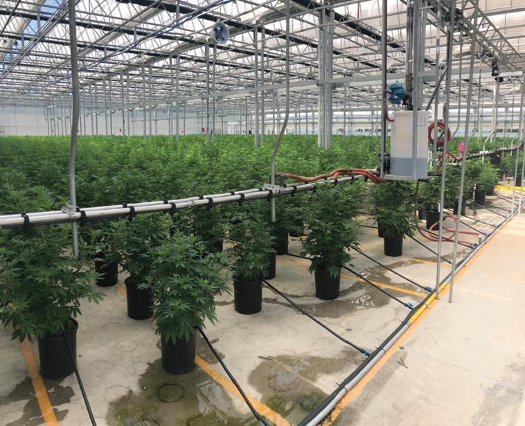 Cannabis conversion - Greenhouse Management