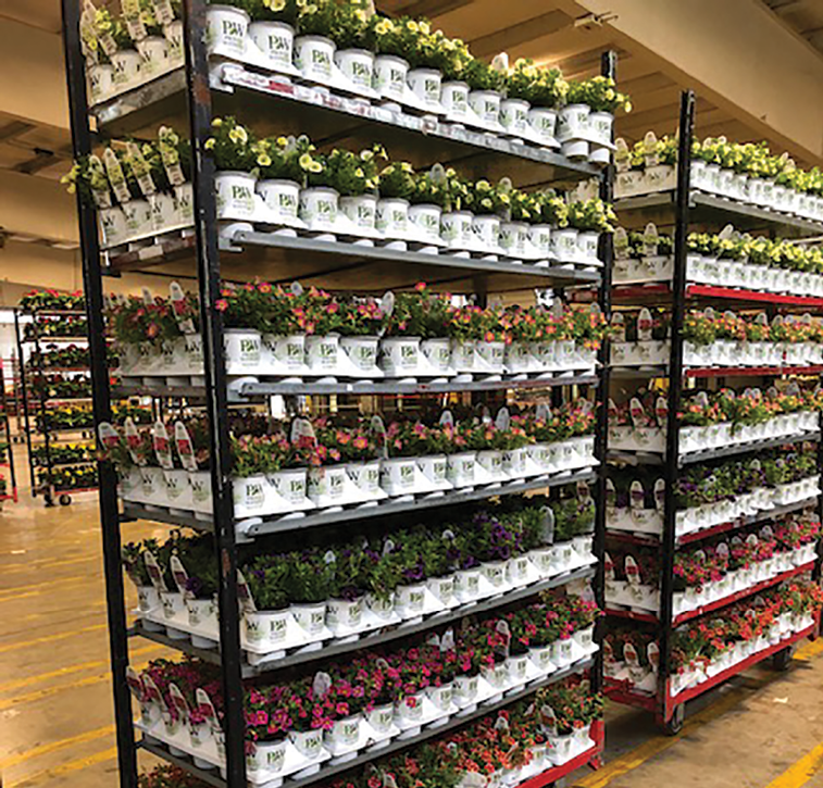 A southern success story - Greenhouse Management