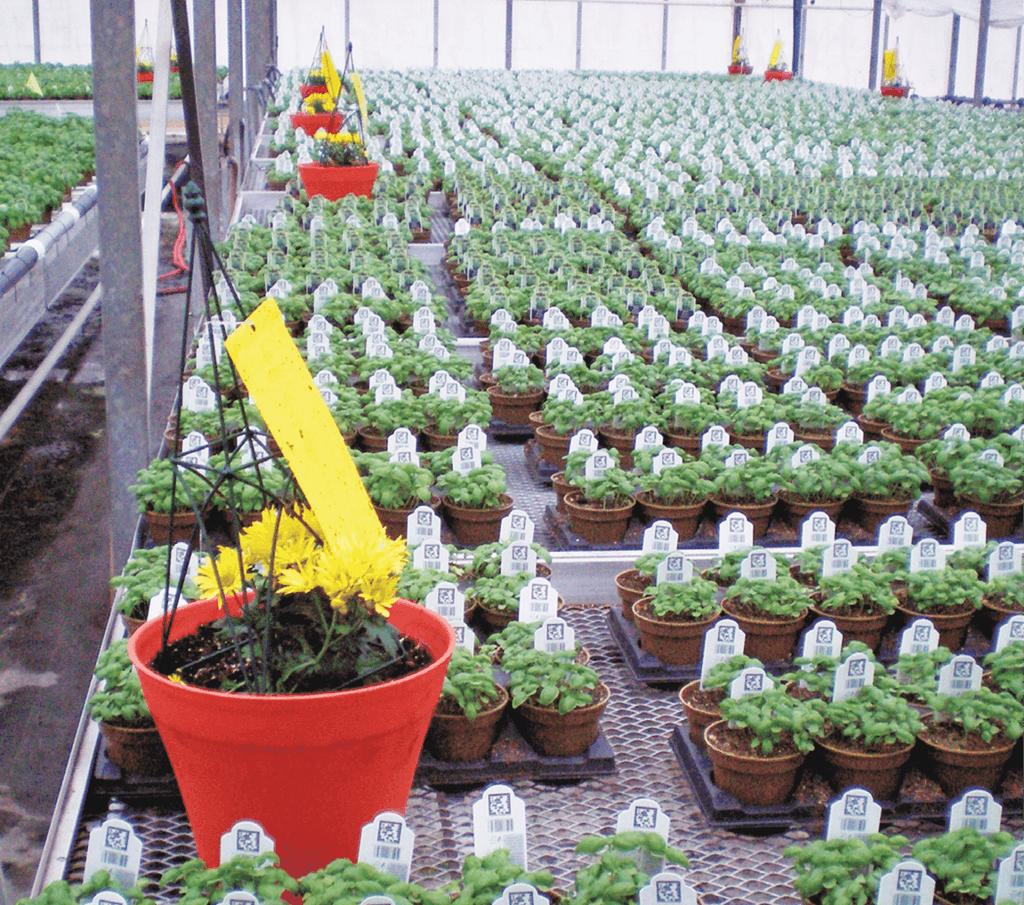 Planter Dans Un Talus sentry plants - greenhouse management