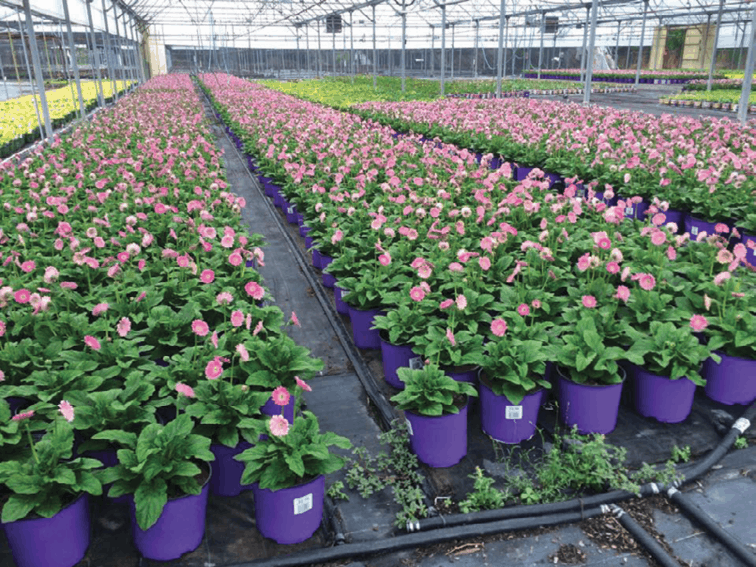Solving Pest Problems Greenhouse Management