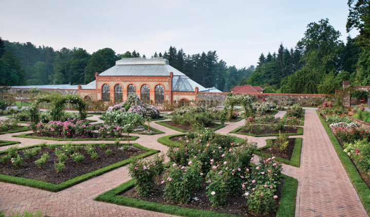 The Biltmore rose garden has been in continuous cultivation since 1895. The trials are located in the public rose garden.
