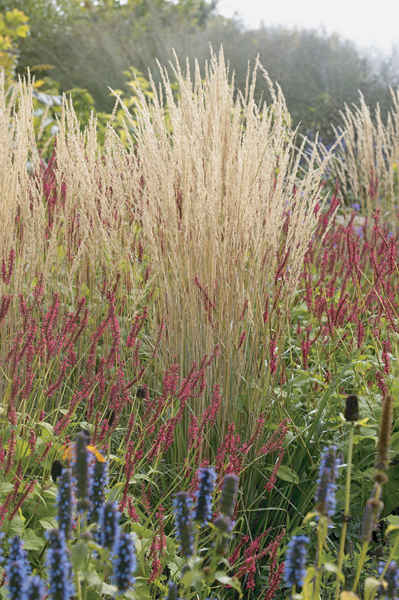 In milder climates, Calamagrostis Karl Foerster and Festuca Beyond Blue can be finished outdoors through the winter.
