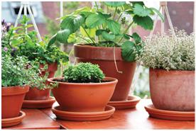Estudio: Jardinería crece gracias a los millennials - Manejo de Viveros 2