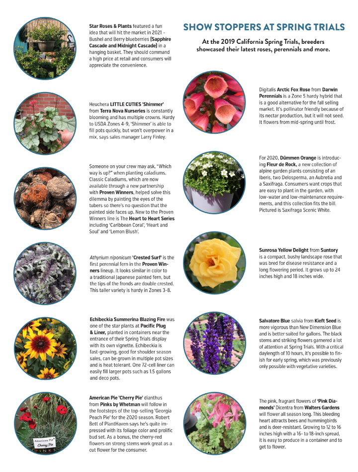 Nursery Management - May 2019 - Show stoppers at Spring Trials