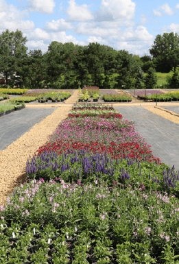 Attracting Buyers And Investors Nursery Management